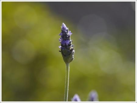 我が家は春でも花が少ないから、野草で我慢しましょう(*⌒∇⌒*)テヘ♪_b0175688_22485147.jpg