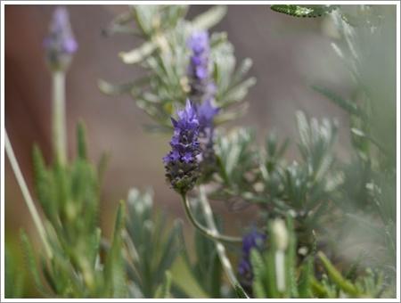 我が家は春でも花が少ないから、野草で我慢しましょう(*⌒∇⌒*)テヘ♪_b0175688_22485378.jpg