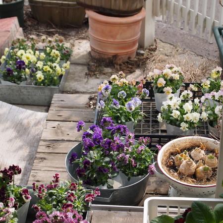 春は忙しい_a0292194_17435681.jpg