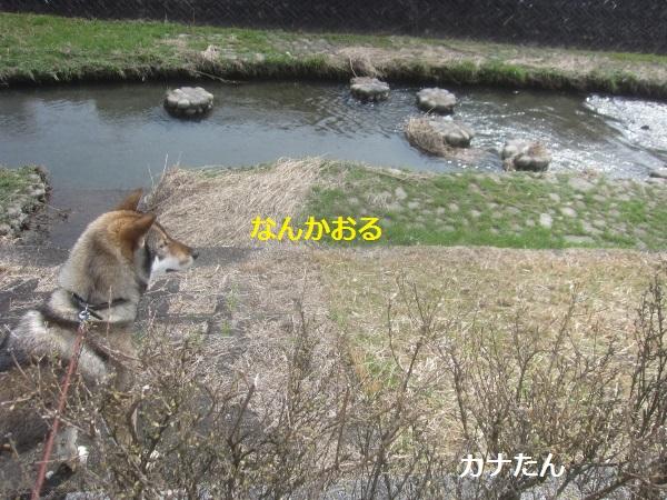 f0143123_11195963.jpg
