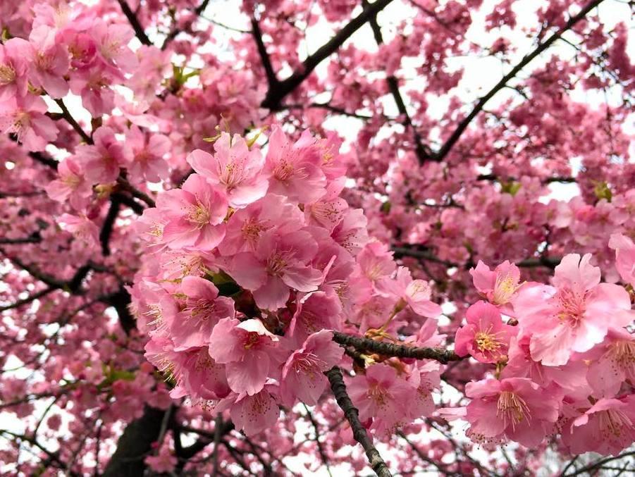 春ラン@代々木公園_a0231828_23442048.jpg