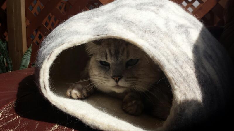 ハーブティと猫玉_e0155231_2052561.jpg