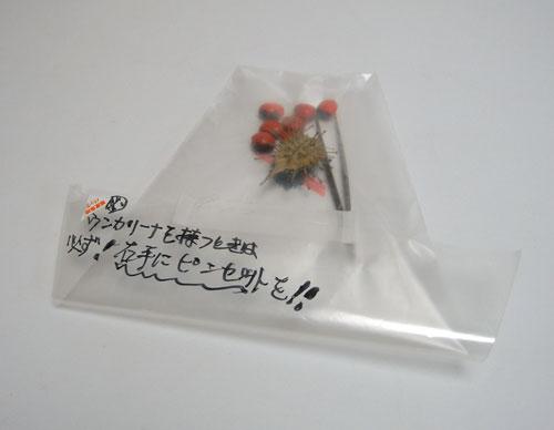 KAWABE博士から頂いた凶器植物_d0130640_2031023.jpg