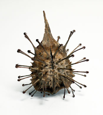 KAWABE博士から頂いた凶器植物_d0130640_2036116.jpg