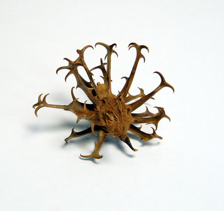 KAWABE博士から頂いた凶器植物_d0130640_21371029.jpg