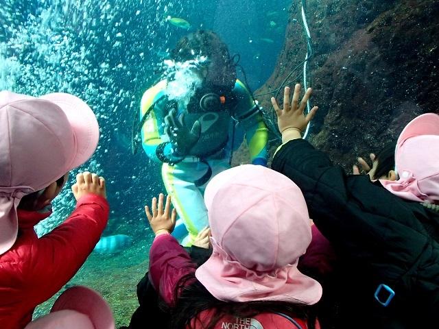 エイ    (新江の島水族館)_d0105967_12235203.jpg