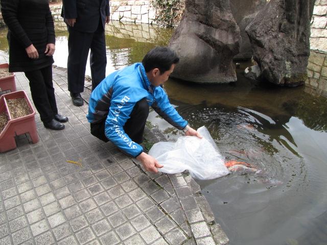 鯉の嫁入り??_f0096067_20234426.jpg