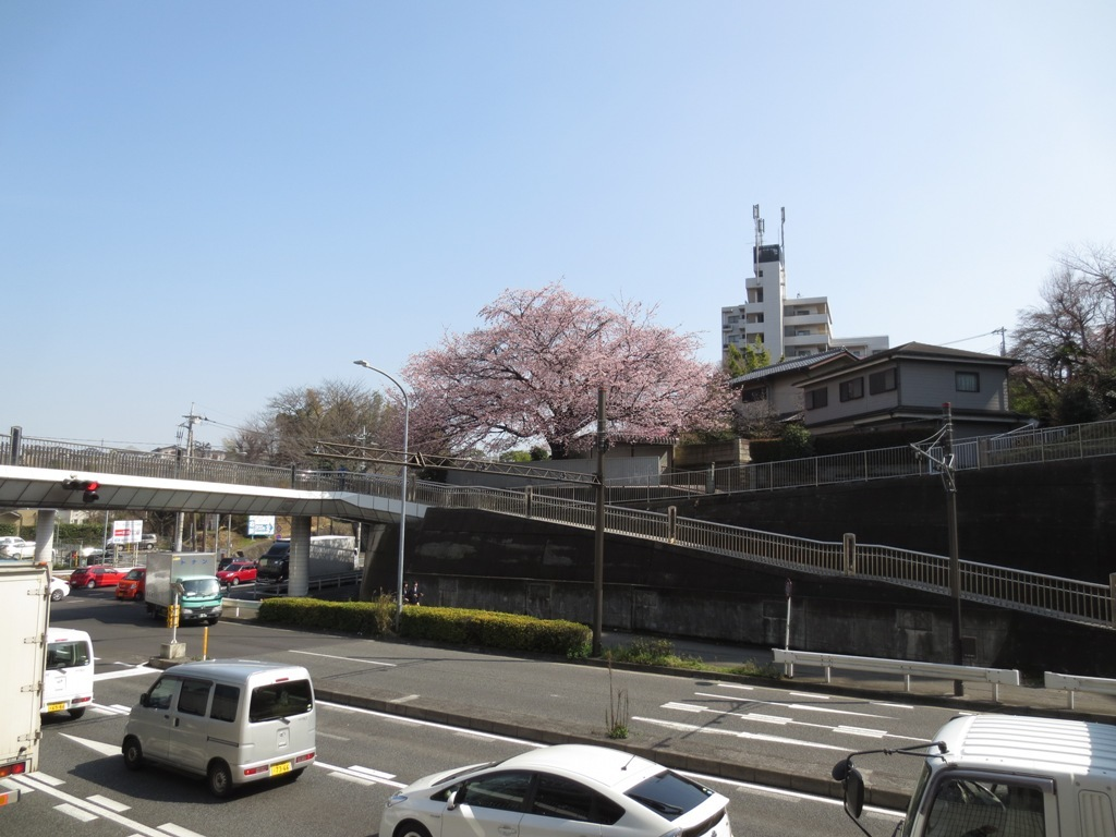 桜咲く_c0310571_16131642.jpg