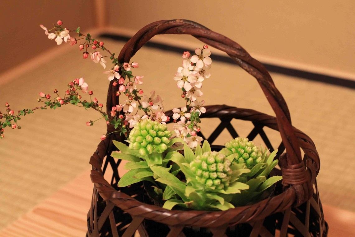 茶花  ~フキノトウ、ユキヤナギ~_a0107574_19591482.jpg