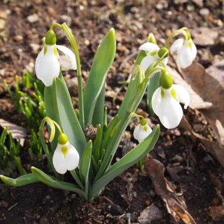 お庭にも春が_a0292194_22345748.jpg
