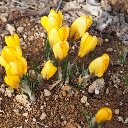 お庭にも春が_a0292194_22353960.jpg