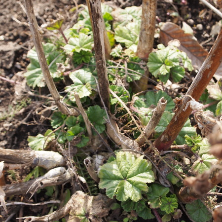 お庭にも春が_a0292194_2242402.jpg