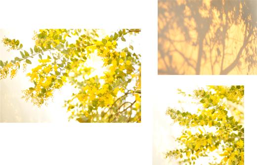 菜種梅雨と、黄色のリース。_d0174704_16512837.jpg