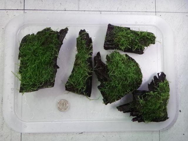 150319 熱帯魚・水草・観葉植物_f0189122_13282359.jpg