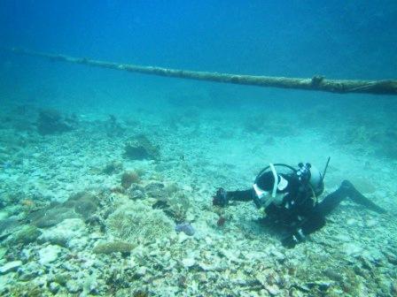 海中ケーブル発見!!_a0189838_16503548.jpg