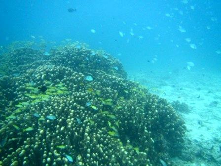 海中ケーブル発見!!_a0189838_16511187.jpg