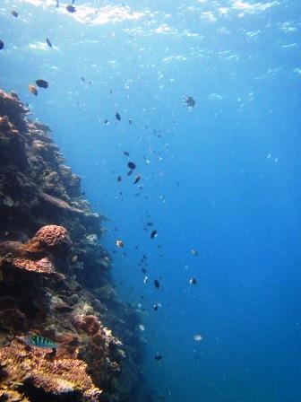 海中ケーブル発見!!_a0189838_16512873.jpg