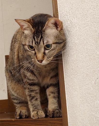 イキイキにーちゃん【情報追加】_a0028451_12334655.jpg