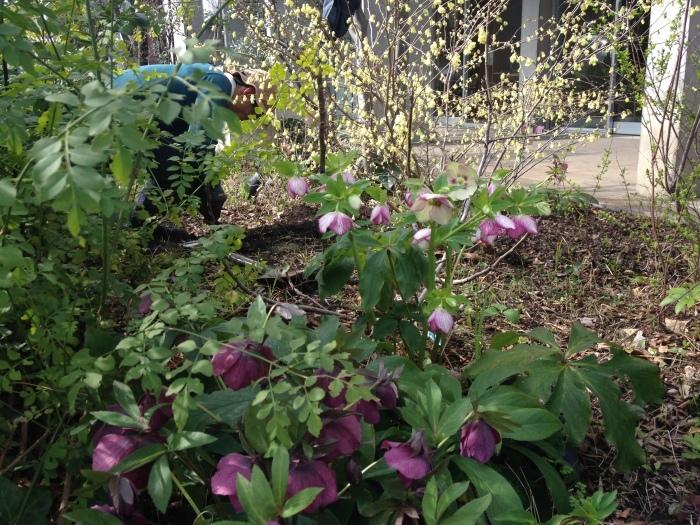 Keyaki Garden 0318_b0167282_12373133.jpg