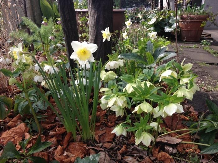 Keyaki Garden 0318_b0167282_12375416.jpg