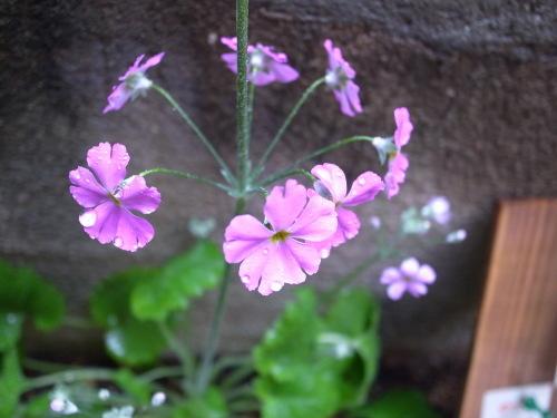 (金)春の訪れ_c0353492_11055804.jpg