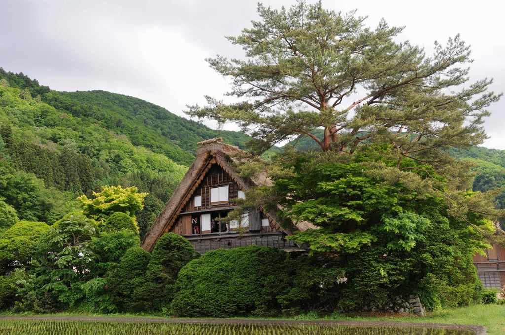 白川郷を訪ねて_a0148206_925266.jpg