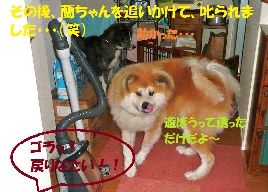 f0121712_14471677.jpg