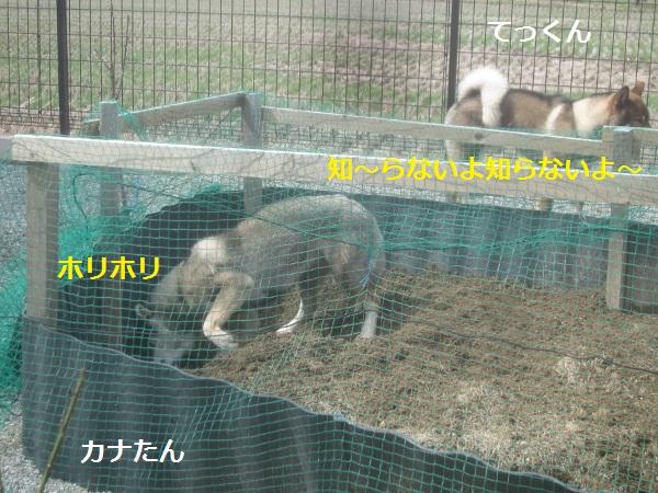 f0143123_11303852.jpg