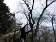 宮島さくら・もみじの会 平成26年度第7回作業_f0229523_14142826.jpg