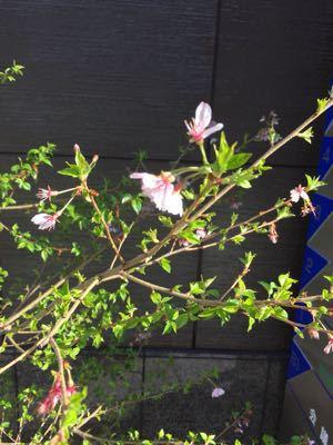 春近し_c0170233_17431488.jpg