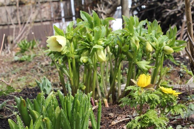 早春の庭_b0132338_10194778.jpg