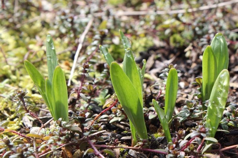 早春の庭_b0132338_10200416.jpg