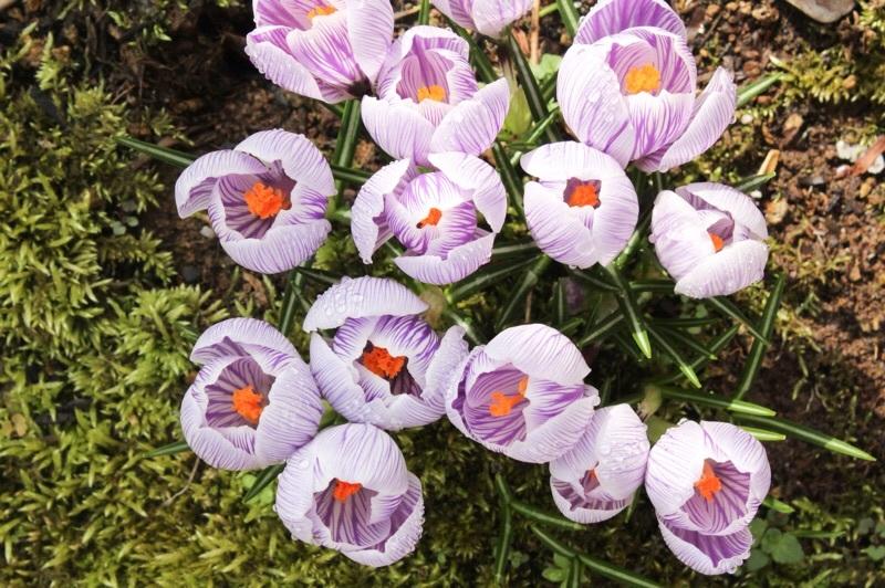 早春の庭_b0132338_10201733.jpg