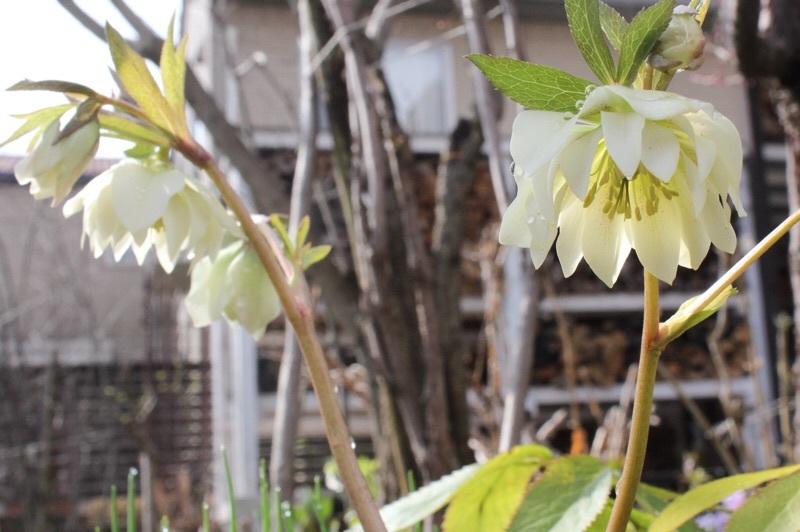 早春の庭_b0132338_10203458.jpg
