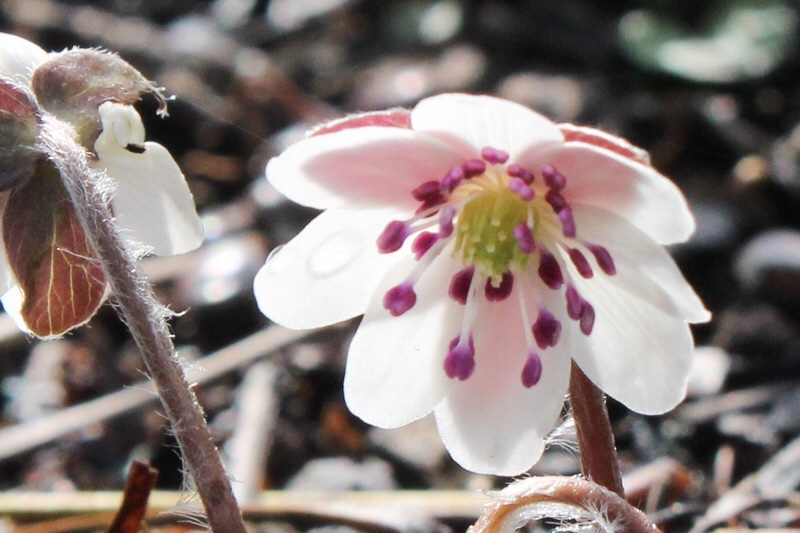 早春の庭_b0132338_10204902.jpg