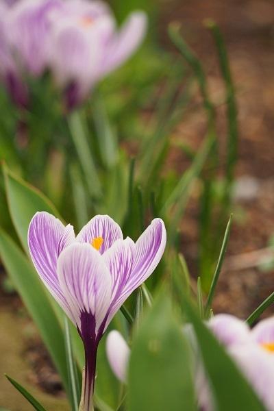 春さんぽ_a0292060_19481731.jpg