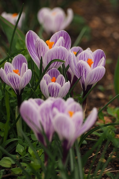 春さんぽ_a0292060_19533459.jpg