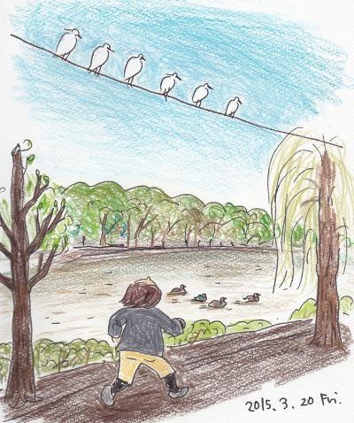 Herons in a park _f0072976_20405256.jpg