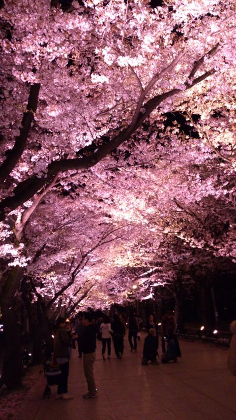 今年ももうすぐ観桜会!_d0182179_1642105.jpg