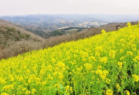 菜の花畑・マザー牧場_b0083801_01541045.jpg