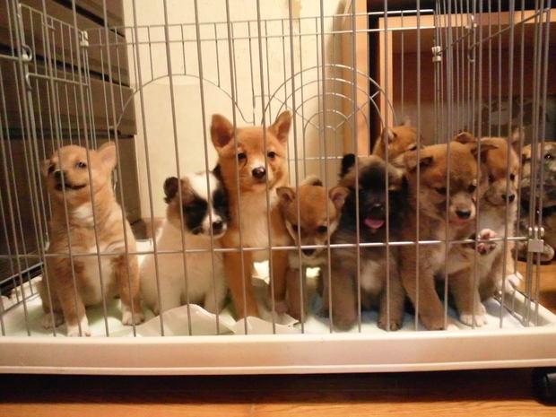 3/22 子犬たちも参加します_f0242002_1113512.jpg