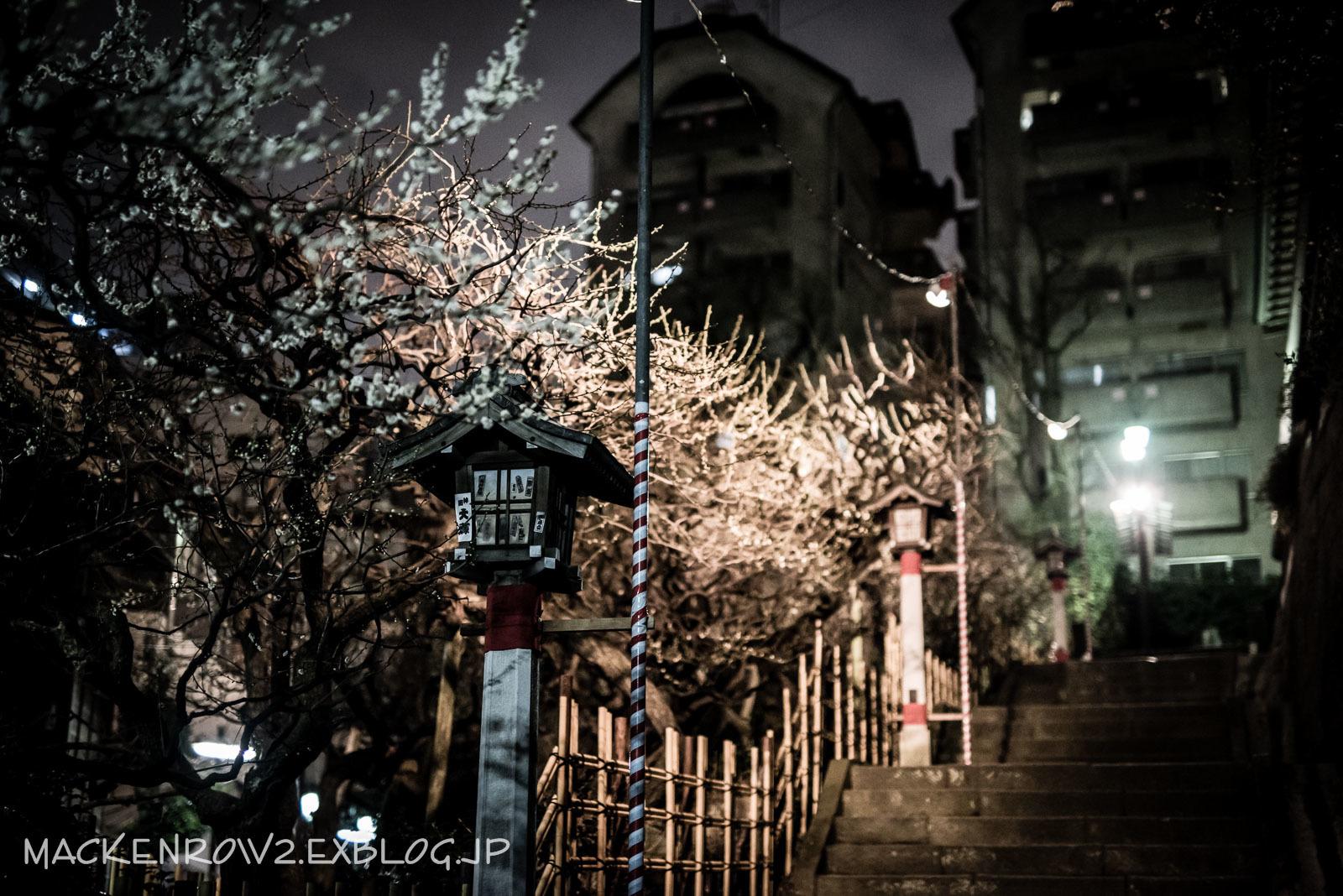 湯島天神梅祭り_a0232322_13244513.jpg