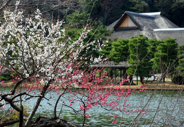 春の三渓園(横浜)_d0123528_18021006.jpg