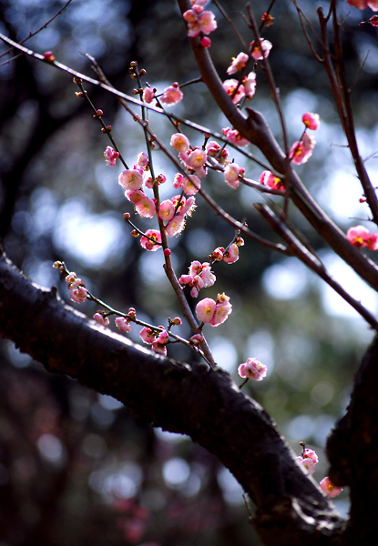 春の三渓園(横浜)_d0123528_18022595.jpg