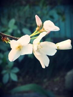 春の兆しが・・・_d0188045_10165064.jpg