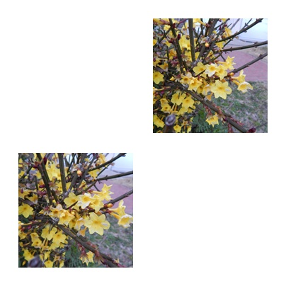 f0031546_9501087.jpg