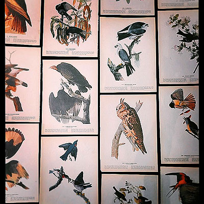 NEW ARRIVAL 「THE BIRDS OF AMERICA」_f0247848_14153957.jpg