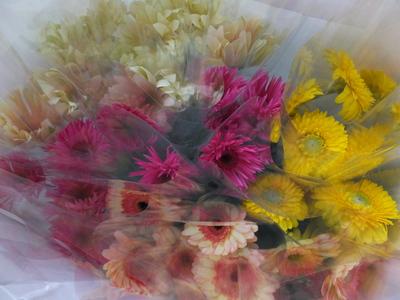 オークリーフ(卒業式の花束)_f0049672_16134249.jpg