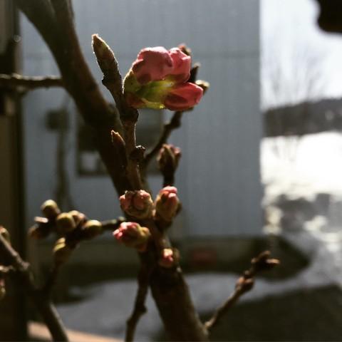 春ですね~_d0182179_160571.jpg