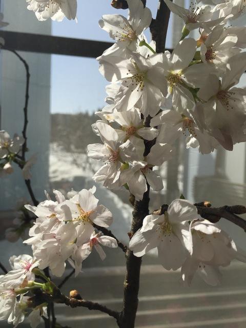 春ですね~_d0182179_1623096.jpg